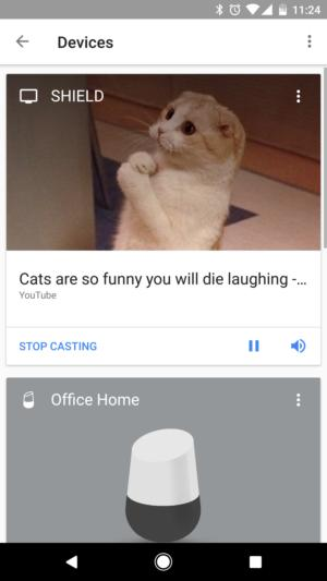 cat videos shield