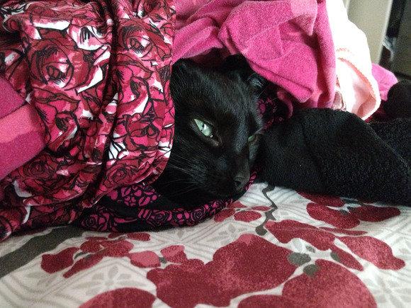 moto z play laundry cat