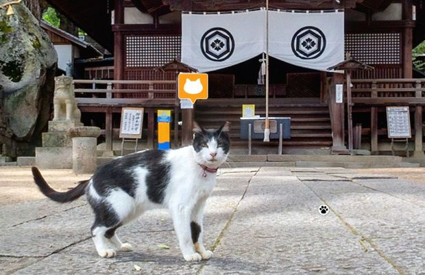 cats street view2