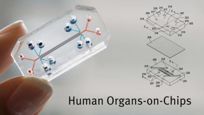 organ-on-a-chip bioprinting