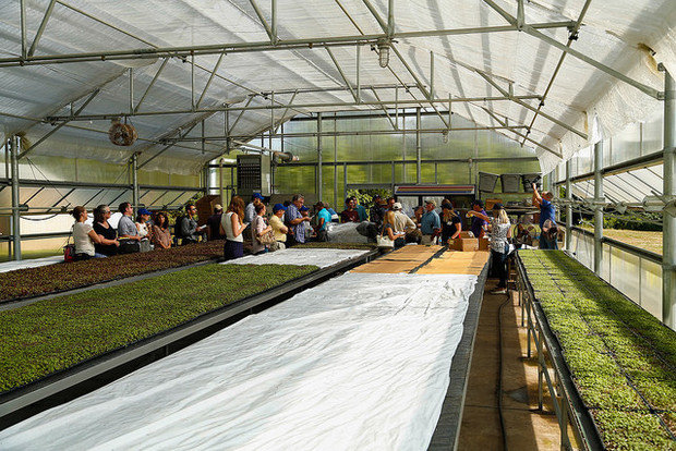 quansett nursery microgreen greenhouse