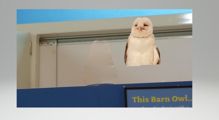 owl capture Paint 3D Magic Select