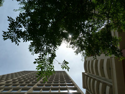 outside_under_tree_building